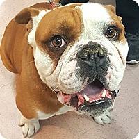 Adopt A Pet :: Harry - Oakland, CA