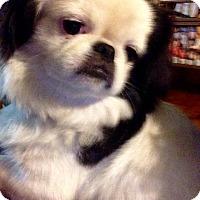 Adopt A Pet :: Scarlet - Hazard, KY