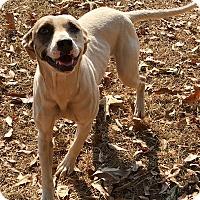 Adopt A Pet :: Allie - Plainfield, CT