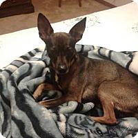 Adopt A Pet :: Amadeus - New Oxford, PA