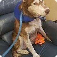 Adopt A Pet :: Leo - New Smyrna Beach, FL