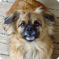 Adopt A Pet :: Gizmo - Spartanburg, SC