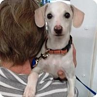 Adopt A Pet :: Marco - Evergreen, CO
