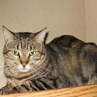 Adopt A Pet :: Cyrus aka Max - San Antonio, TX