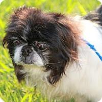 Adopt A Pet :: Gracious - Chantilly, VA