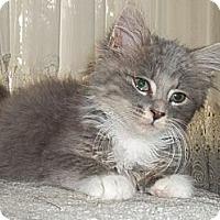 Adopt A Pet :: Einstein - Acme, PA
