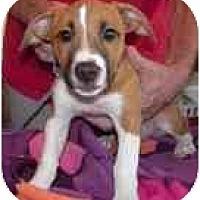 Adopt A Pet :: Porthos - Jacksonville, FL