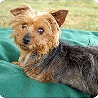 Adopt A Pet :: Jada - Kansas City, MO