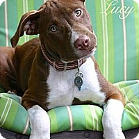 Adopt A Pet :: Lil' Lucy - Flowery Branch, GA