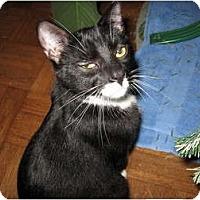 Adopt A Pet :: Tramp - Wakinsville, GA