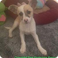 Adopt A Pet :: Portia - Oceanside, CA