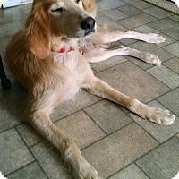 Adopt A Pet :: Sammi - Richmond, VA