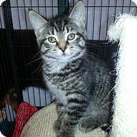 Adopt A Pet :: Timone - Caistor Centre, ON