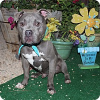 Adopt A Pet :: Romeo - Toluca Lake, CA
