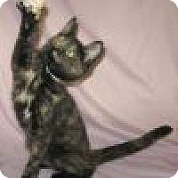 Adopt A Pet :: Tortalina - Powell, OH