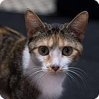 Adopt A Pet :: Strudel - New York, NY