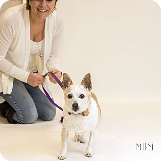 Chihuahua Dog for adoption in Naperville, Illinois - Julia