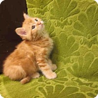 Adopt A Pet :: *MANDY - Upper Marlboro, MD