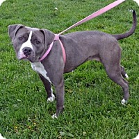 Adopt A Pet :: Tracy - Akron, OH