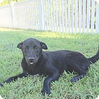 Adopt A Pet :: Fanny - St Petersburg, FL
