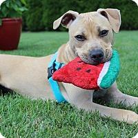 Adopt A Pet :: URGENT!!!FOSTERORADOPTPenny - Shrewsbury, NJ