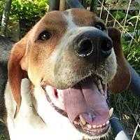 Adopt A Pet :: Jacob Roscoe - Charlottesville, VA
