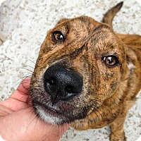 Adopt A Pet :: Sean - Manhasset, NY