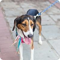 Adopt A Pet :: Penny - Washington, DC