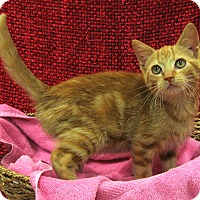 Adopt A Pet :: Spice - Redwood Falls, MN