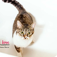 Adopt A Pet :: Minnie - Cincinnati, OH