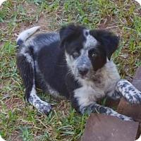 Adopt A Pet :: Kira - Smithtown, NY