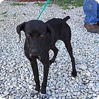 Adopt A Pet :: Onyx - Washington, DC
