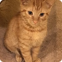Adopt A Pet :: Ginger - Madison, NJ