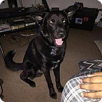 Adopt A Pet :: Zeus - Pataskala, OH