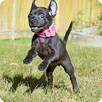 Adopt A Pet :: Onyx ~ ADOPTED! - Brattleboro, VT