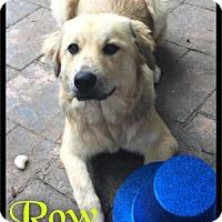 Adopt A Pet :: Rowan (Row) - Foster / 2016 - Maumelle, AR
