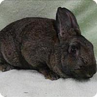 Adopt A Pet :: Penelope - Portland, OR