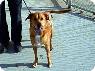 Golden Retriever Mix Dog for adoption in Olathe, Kansas - FLO JO