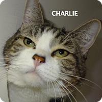 Adopt A Pet :: Charlie - Lapeer, MI