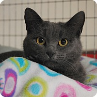 Adopt A Pet :: Bellafina - Winchendon, MA