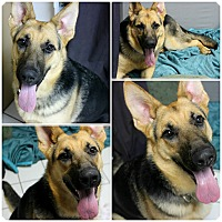 Adopt A Pet :: Brooklyn - Forked River, NJ