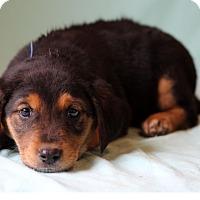 Adopt A Pet :: Kermit - Waldorf, MD