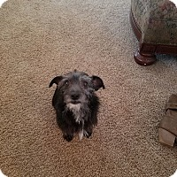 Adopt A Pet :: Brittany - Tomah, WI