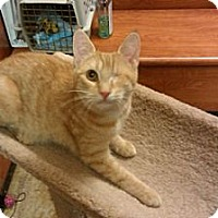 Adopt A Pet :: Rubey - Cranford/Rartian, NJ