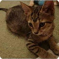 Adopt A Pet :: Poly - Davis, CA