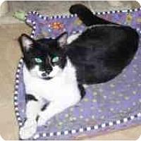 Adopt A Pet :: Chuck - Hamburg, NY