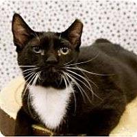 Adopt A Pet :: Reese - Warren, MI