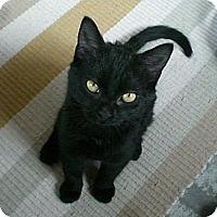 Adopt A Pet :: Diggory - Byron Center, MI