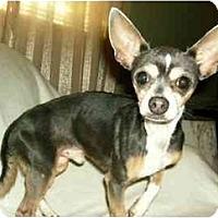Adopt A Pet :: Sport - Mooy, AL
