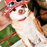Adopt A Pet :: Killer - Bridgeton, MO